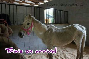 Trixie on arrival